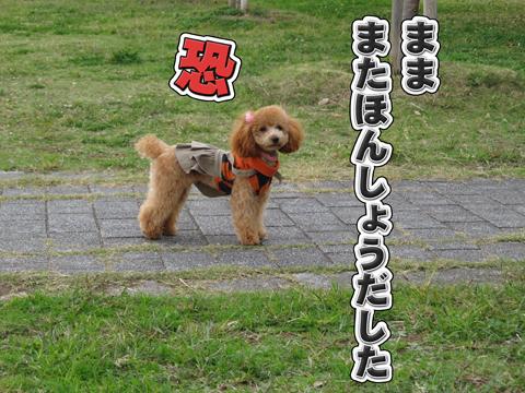 27_20111106004200.jpg
