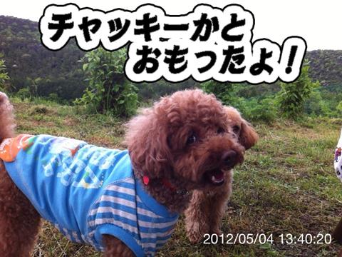 38_20120506164659.jpg