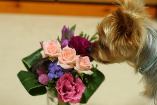 お花きれい~