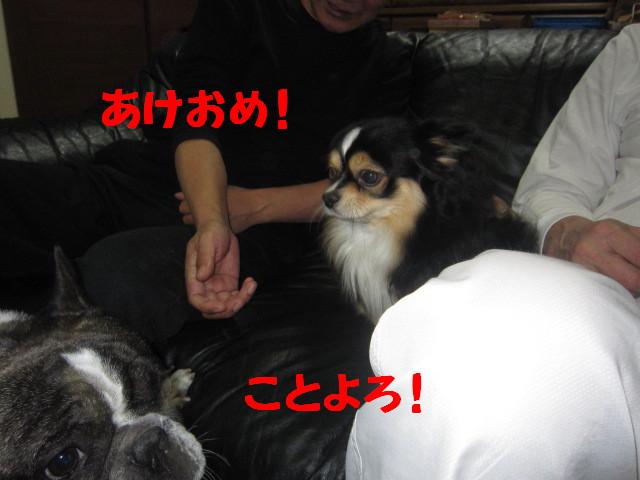 IMG_4030a.jpg