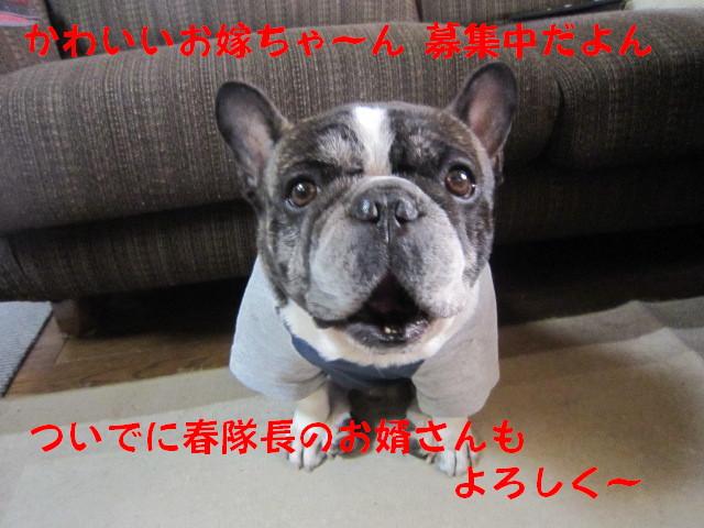 IMG_5571a.jpg