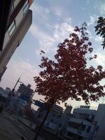 2010_1114_1516.jpg