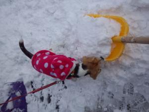 雪かきがんばれー