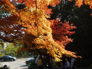 毘沙門堂blog15