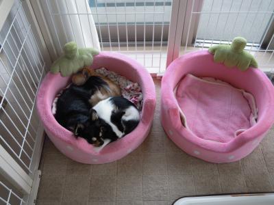 いちごベッド