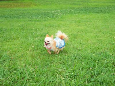 笑顔で走るコロン