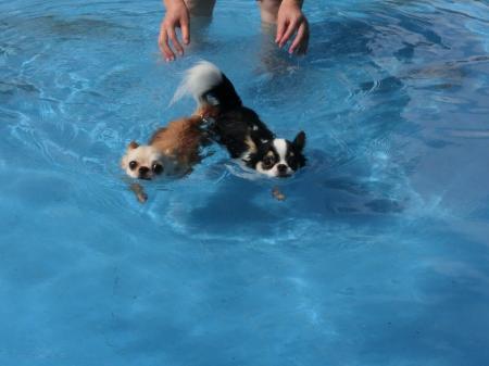 姉妹で水泳