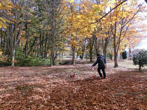 心地よい秋の休日