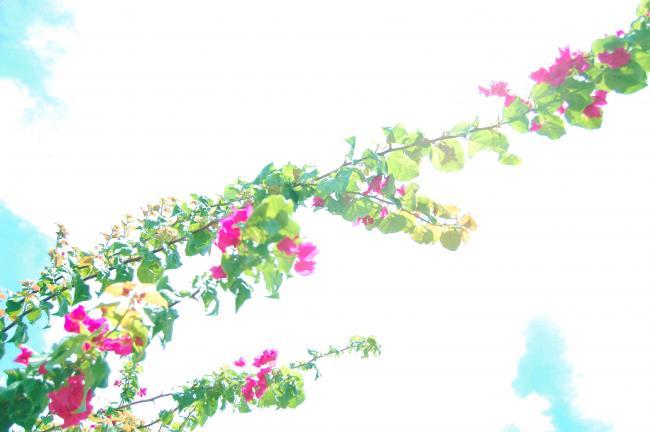 DSC_0011_2_convert_20100805020904.jpg