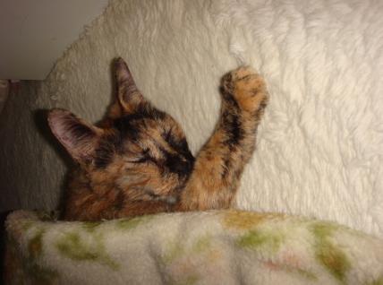 寝るのが1番ニャ