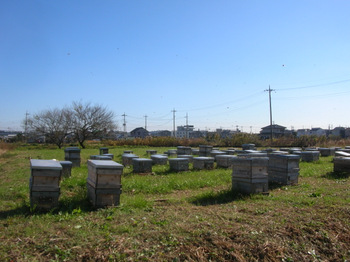 ハチの巣箱