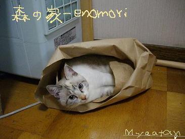 IMGP0057-blog2a.jpg
