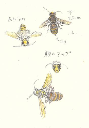 suzumebachi-blog.jpg