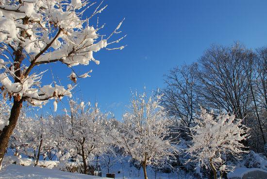雪の次の朝2-31