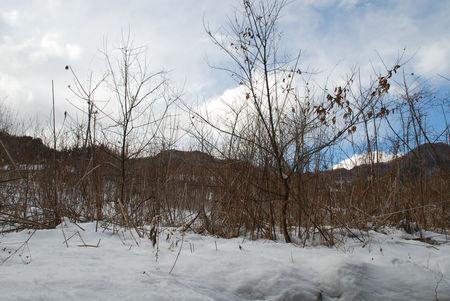 雪の残った散歩道で7