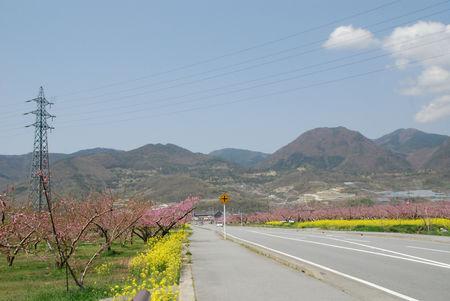 桃の花のある風景10