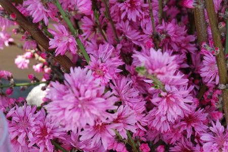 桃の花のある風景17