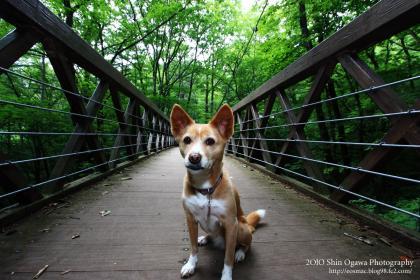 吊り橋みみ02