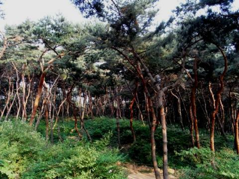 朝鮮王陵 宣陵・靖陵 陵内2