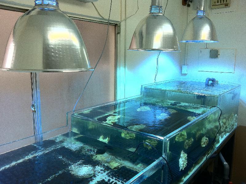 Clam tank