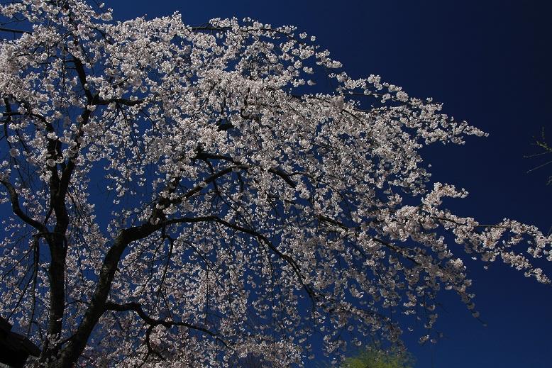 京都祇園にて、4