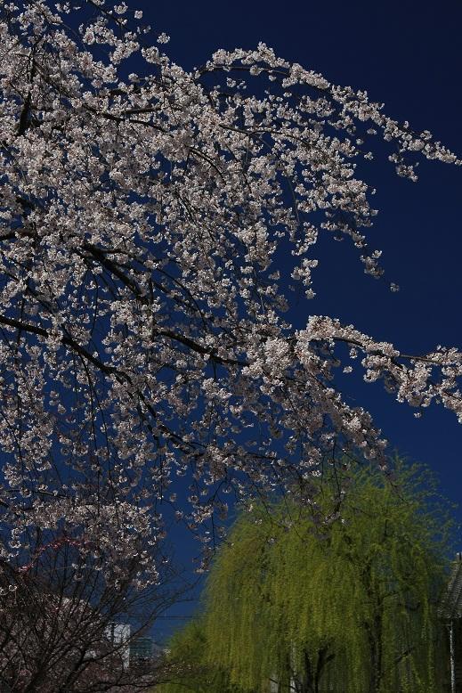 京都祇園にて、1