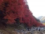 香嵐渓の様子