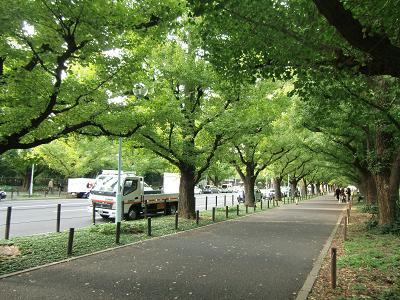 神宮の並木道