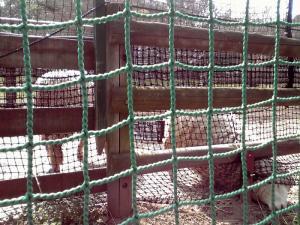 大泉緑地 2012 ひつじ広場