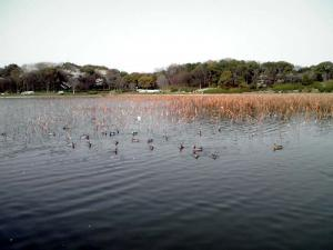 大泉緑地 2012 大泉池(その1)