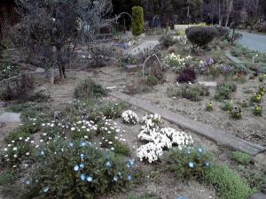 大泉緑地 2012 はないずみの庭(その1)
