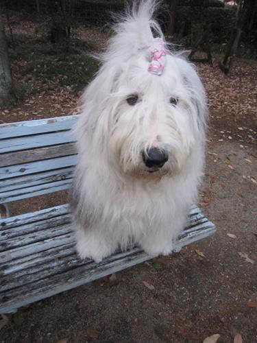 椿峰中央公園のベンチで