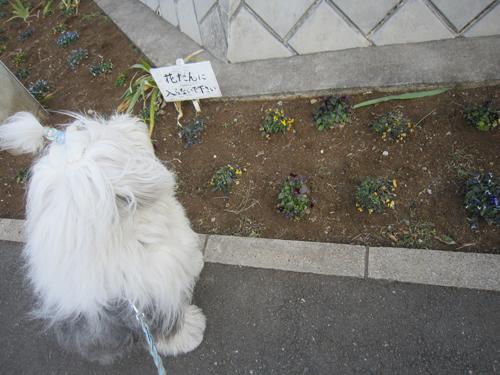 花壇もしもやけ!