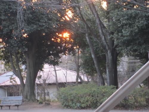 木の間隠れの夕陽
