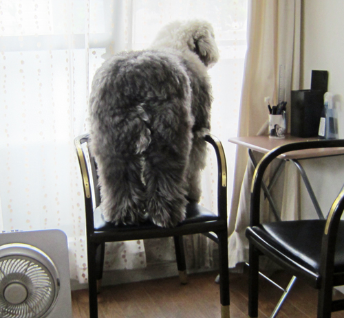 椅子が小さい
