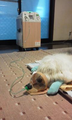 パティと酸素吸入器