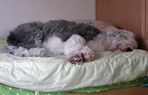 眠たいの〜!