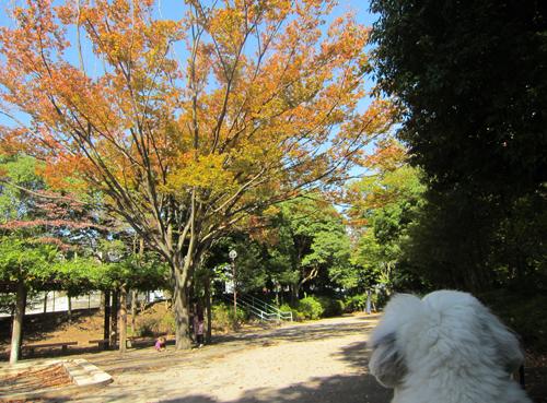 高峰公園の欅