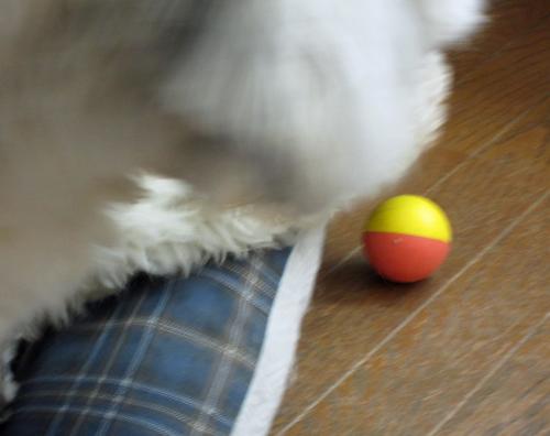ボールだぁ!