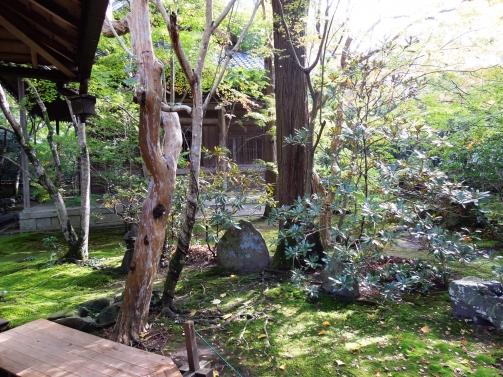 蓮花寺庭2