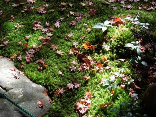 蓮花寺散紅葉