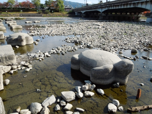 鴨川飛び石 カメ