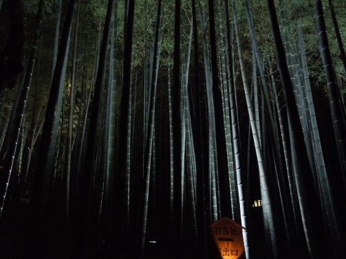 竹林ライトアップ1