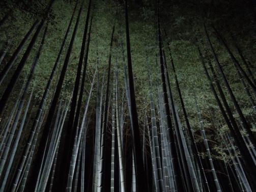 竹林ライトアップ2