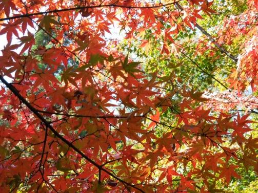 庭園の紅葉2