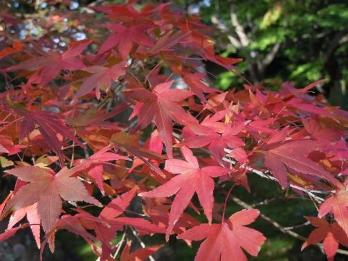庭園の紅葉4
