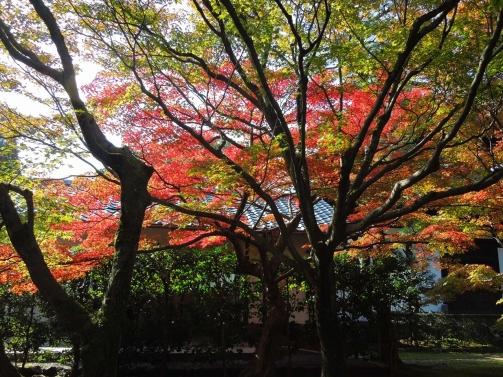 庭園の紅葉5