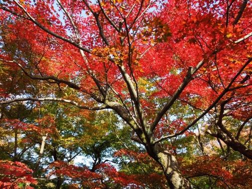 庭園の紅葉6