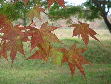 山の紅葉も遅れ気味