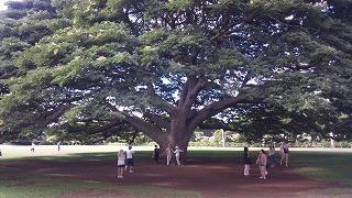 この樹なんの樹 日立の樹だよ
